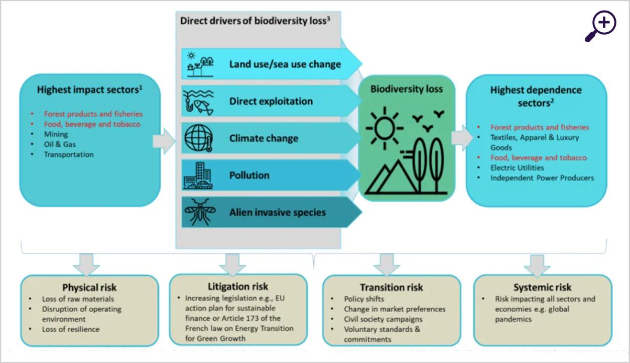 Natuurverlies, risico's en implicaties voor beleggers